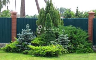 Хвойники разных размеров в садовом ландшафте
