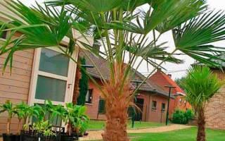 Пальмы картинки с названиями