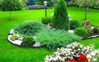 Хвойные растения в дизайне дачного участка