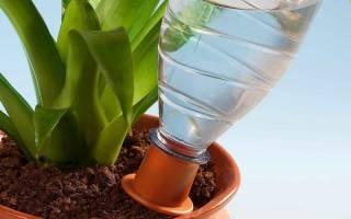 Как сделать капельный полив из пластиковых бутылок для комнатных растений