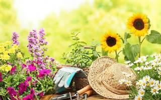 Как подкормить цветы глюкозой