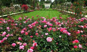 Уход за розами осенью подготовка к зиме на юге россии