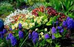 Многолетние цветы для дачи не требующие ухода посадка осенью
