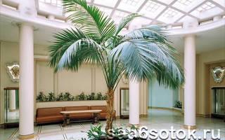 Уход за комнатной пальмой в домашних условиях