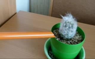 Все о кактусах как ухаживать