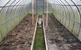 Найти причины и способы устранения позеленения почвы после полива