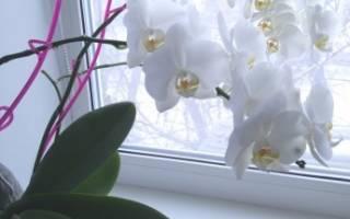 Как ухаживать за цветком орхидея в домашних условиях