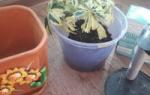 Как организовать полив цветов на время отпуска своими руками