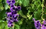 Комнатные цветы на ярмарке в йёнчёпинге