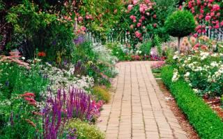 Многолетние цветы высокие цветущие