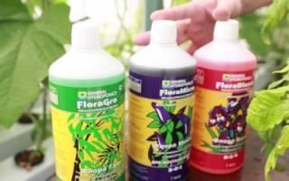 Удобрение для гидропонного выращивания своими руками