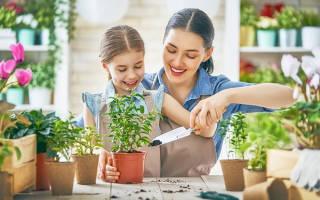 Уход за цветами комнатными в домашних условиях осенью
