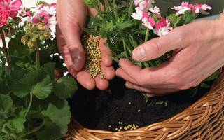 Герань уход осенью удобрения и опрыскивание
