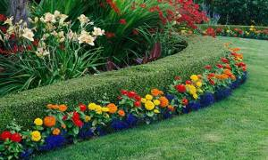 Красивые цветы многолетники для дачи