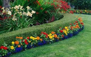 Виды многолетних цветов для дачи