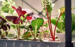 Опишите технологию выращивания комнатных растений без почвы