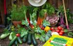Дрожжи для подкормки растений в огороде