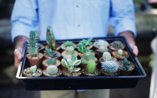 Что такое кактус и как за ним ухаживать