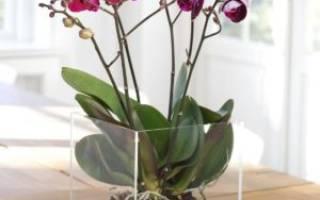 Орхидея как ухаживать в колбе