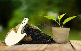Когда удобрять землю навозом осенью или весной