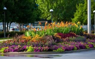 Миксбордер с колокольчиками в садовом дизайне