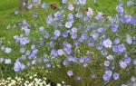 Как вырастить лен из семян в домашних условиях
