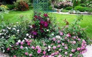 Уход за почвопокровными розами осенью подготовка к зиме