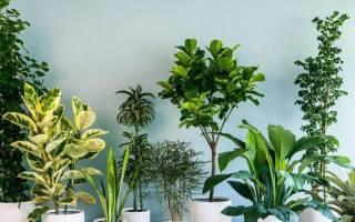 Как называется комнатный цветок у которого длинные тоненькие зеленые листья