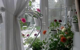 Какие есть виды комнатных растений