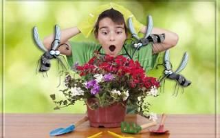 Черные мошки на комнатных растениях как бороться в домашних условиях