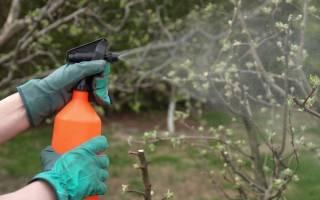 Как опрыскивать яблони железным купоросом