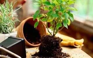 Из под каких деревьев брать землю для комнатных растений