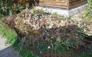 Розы уход осенью в сибири