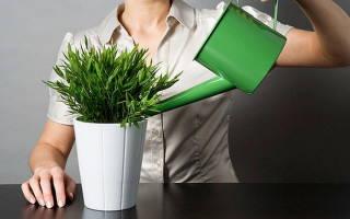 Как смягчить воду для полива растений в домашних условиях