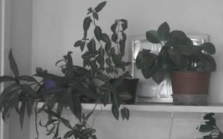 Уход за комнатными цветами осенью подготовка к зиме