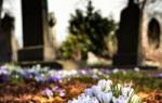 Какие можно посадить цветы на кладбище