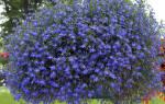 Виды комнатных растений ампельных