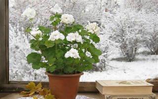 Покупаем комнатные цветы зимой