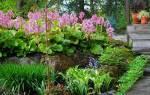 Тенелюбивые цветы для садаландыш