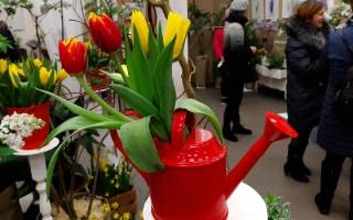 Экспозиция тюльпанов на выставке весенняя флора