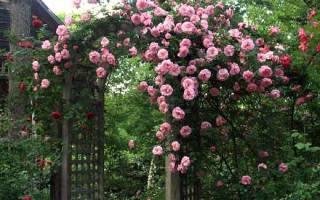 Арка украшенная плетущимися розами и клематисом