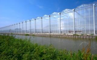 Строительство теплицы по голландской технологии