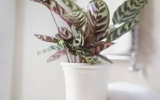 Растения которые могут расти без света комнатные