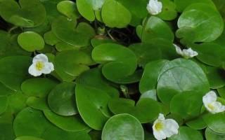 Влияние полива на жизнь растений можно установить с помощью