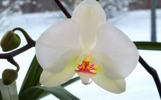 Уход за орхидеями осенью и зимой