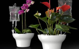 Капельный полив из капельницы своими руками для комнатных цветов