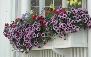 Цветы в горшках тумблер
