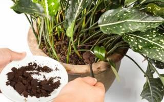 Можно и сладким кофе поливать Комнатные цветы