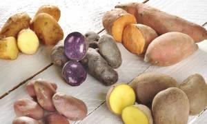 Картошка розара для подмосковья