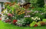 Садовые цветы многолетние названия